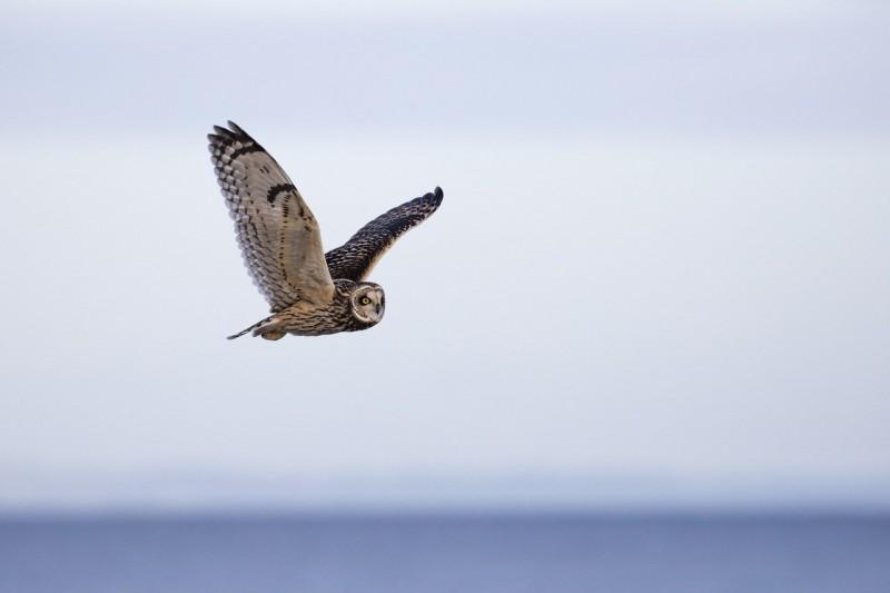ruta de interpretación de la naturaleza y taller de ornitología en Granada con itinerarius.com