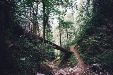 recuperación de veredas y caminos históricos en Granada con itinerarius.com